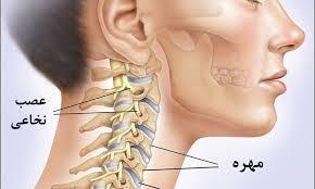 آیا در مورد آناتومی گردن اطلاع دارید؟
