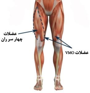 آناتومی قسمت های مختلف پا